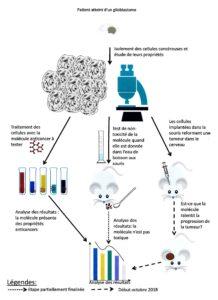 Projet de recherche inhérent au glioblastome